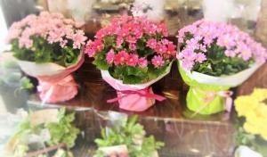 お祝いにお花を贈ろ…
